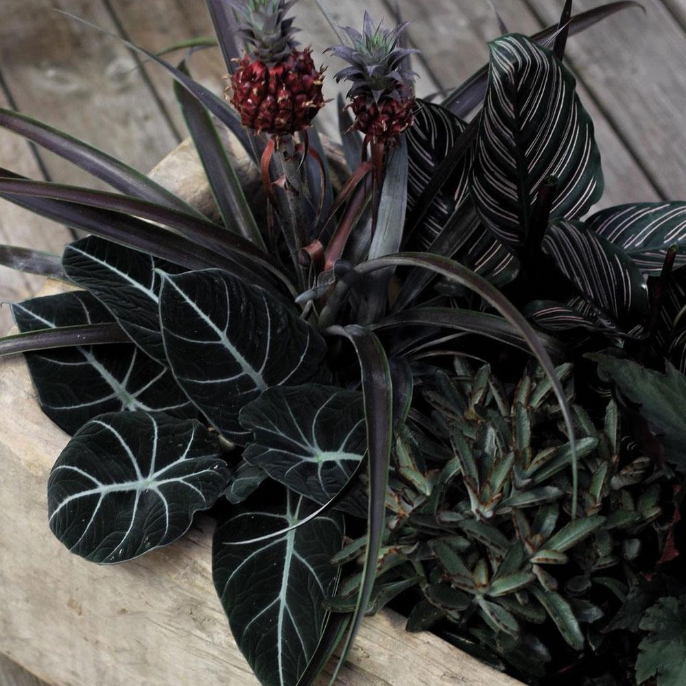 Blomsterträdgården Lockryd - Responsiv hemsida